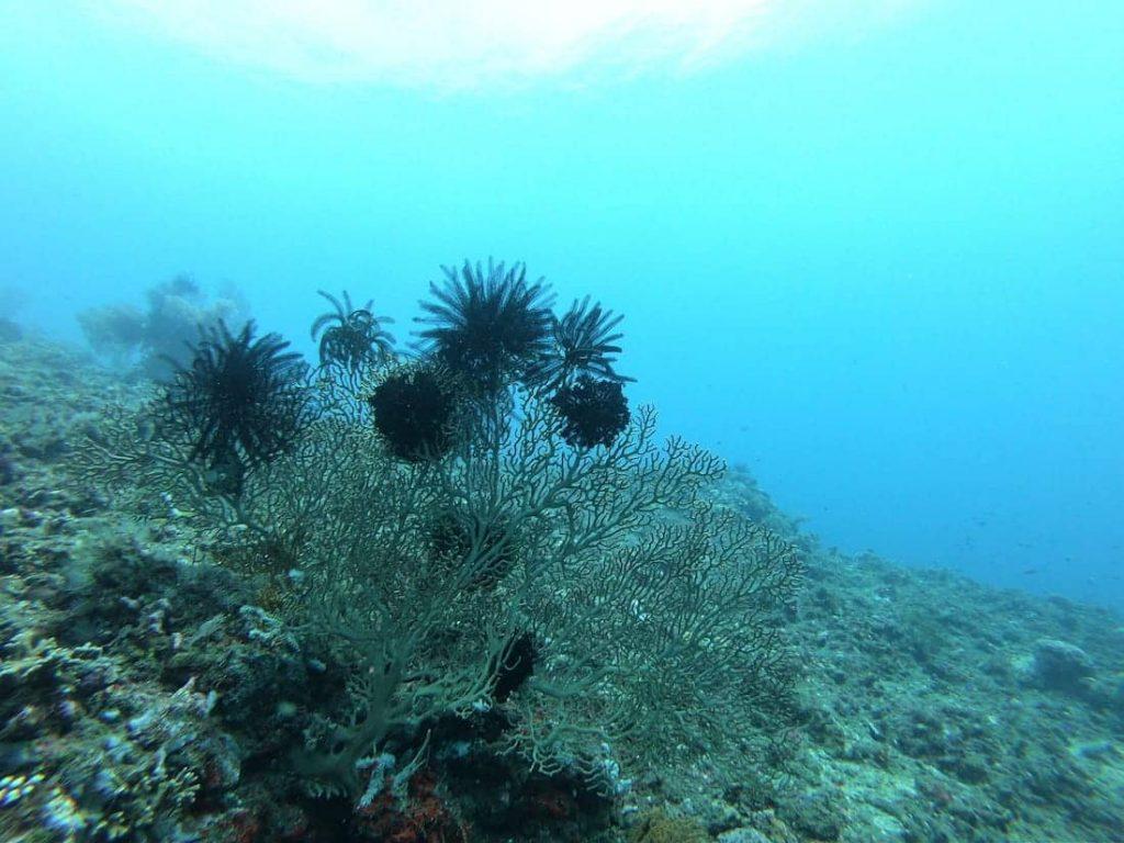 Diving-sous-marine10