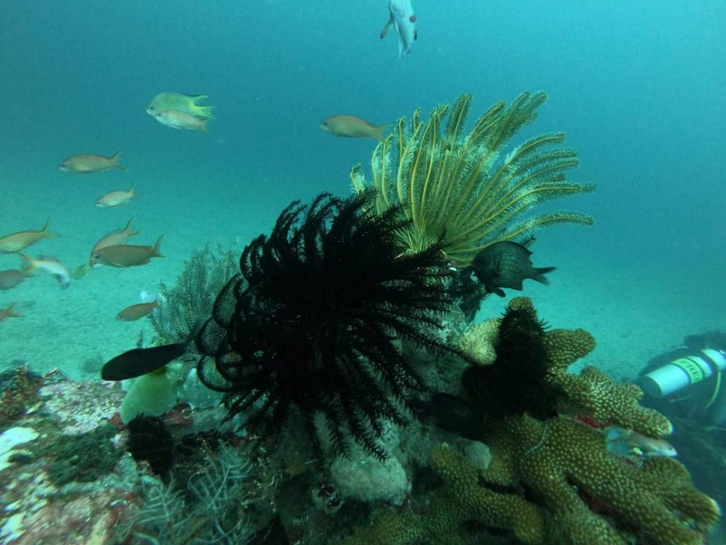 Diving-sous-marine5