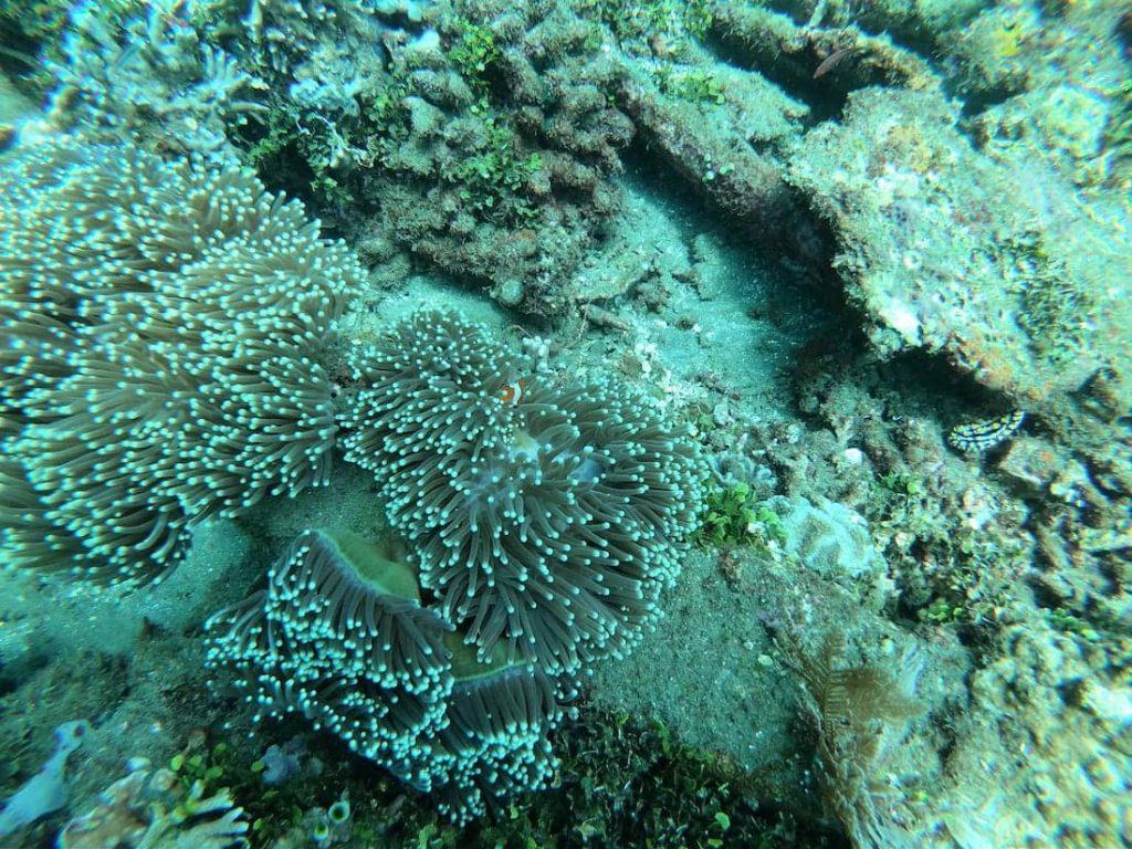 Diving-sous-Marine8