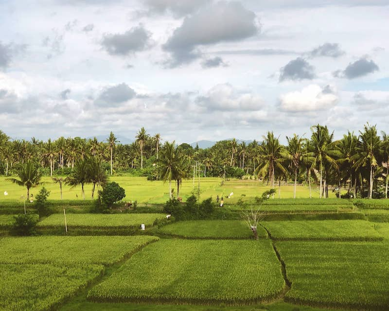 Rizière à Bali