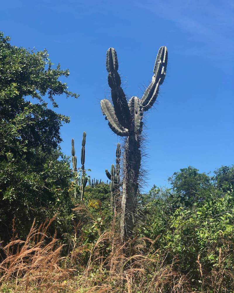 Cactus Lomas de Arena