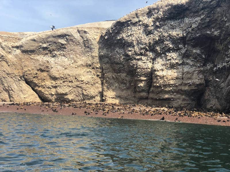 Phoques sur les iles Ballestas