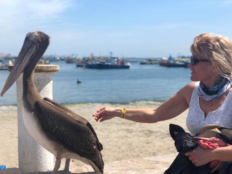 Pelican à Paracas