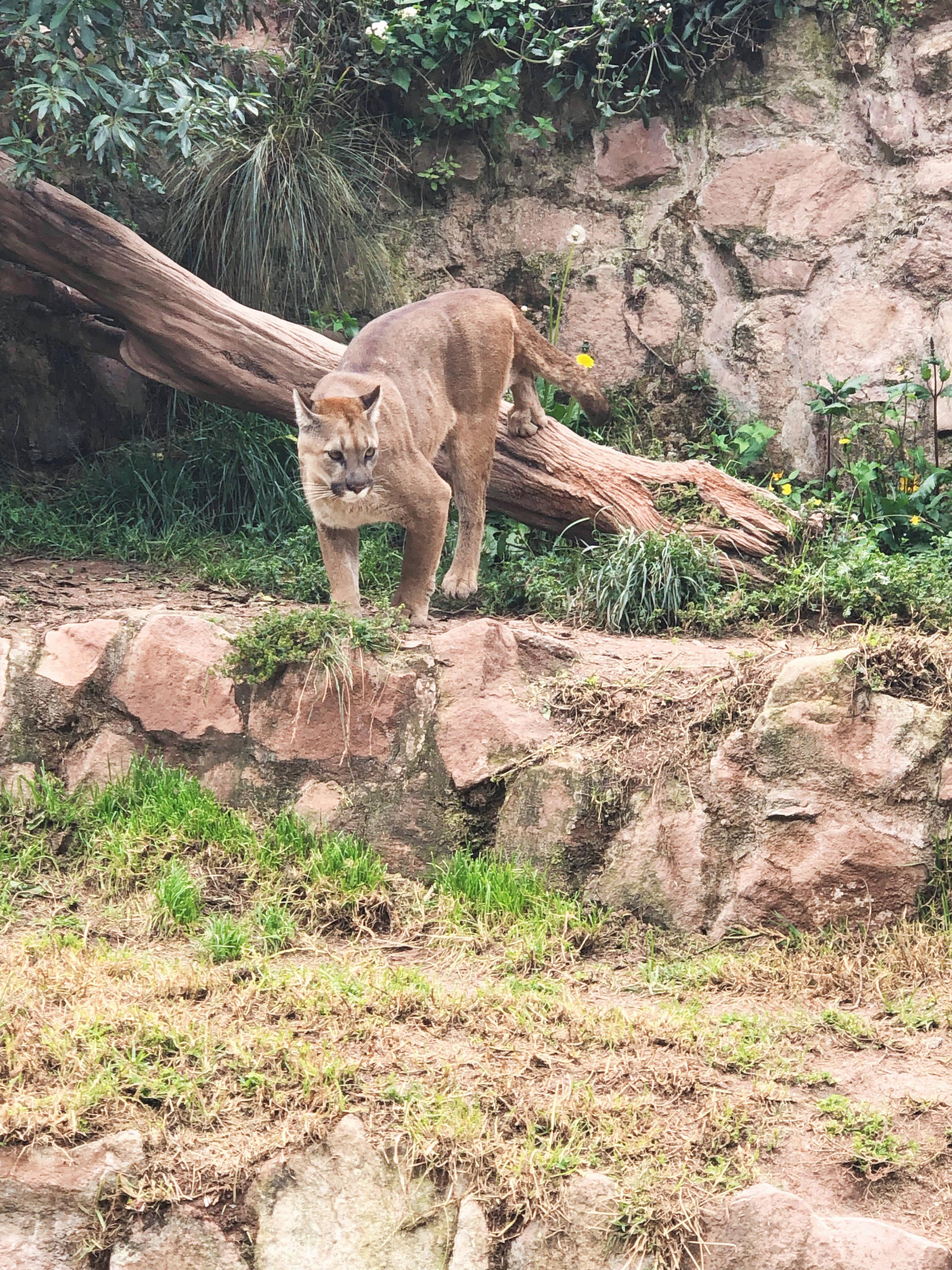 Puma Cochahuasi Animal Reserve