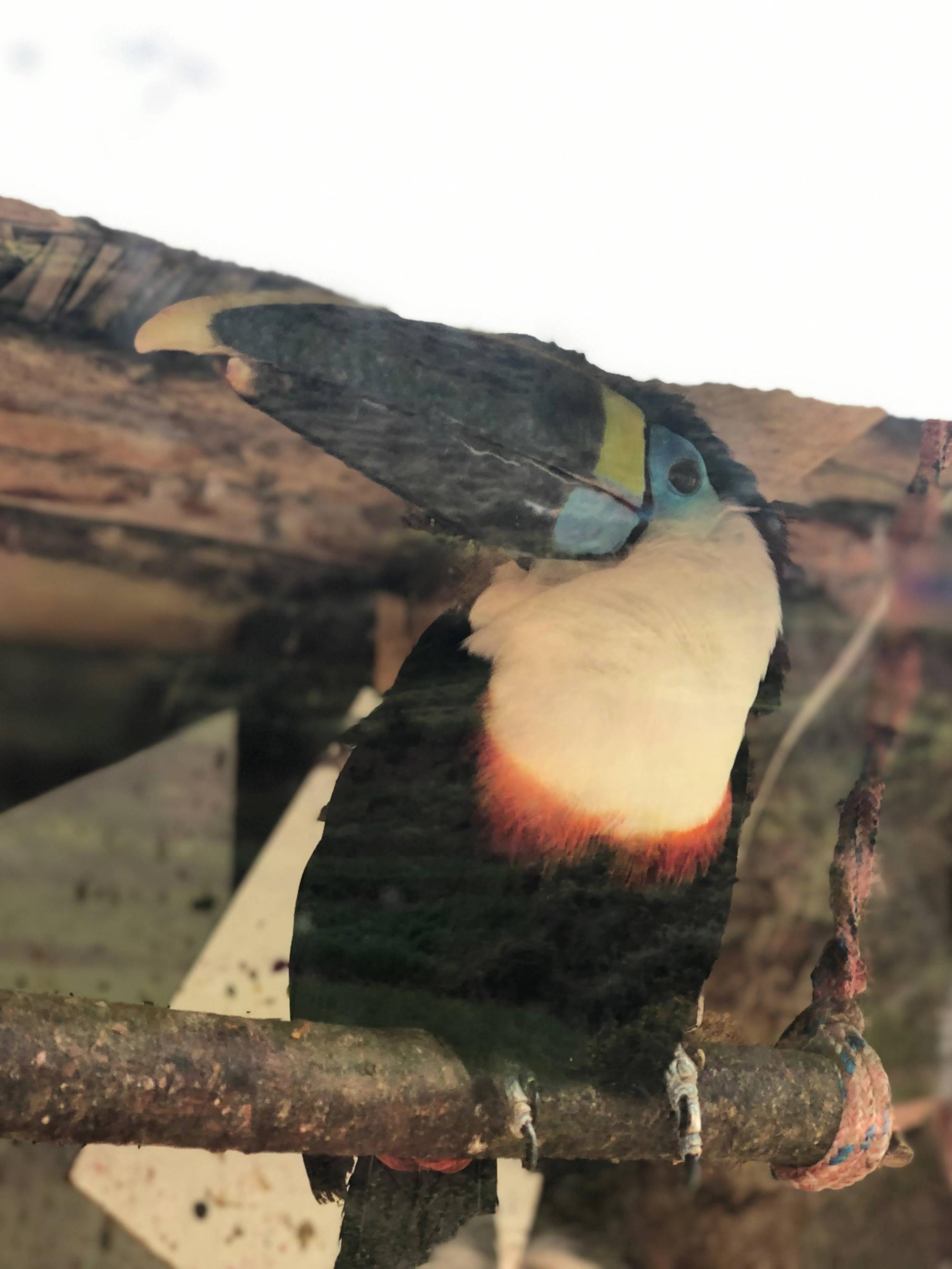 Toucan Cochahuasi Animal Reserve